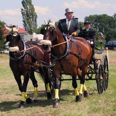 fahrsport-pferde-dingelstaedt
